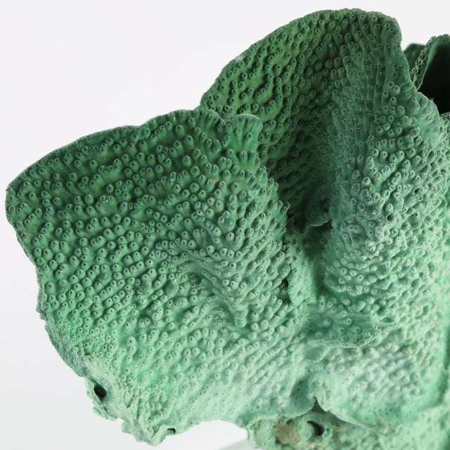 VINTAGE GREEN CORAL SPECIMEN MOUNTED ON A LUCITE STAND For Sale - Image 9 of 10