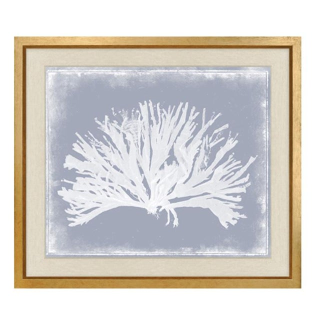 """Contemporary Trowbridge """"Coloured Corals"""" Prints Set of Three For Sale - Image 3 of 7"""