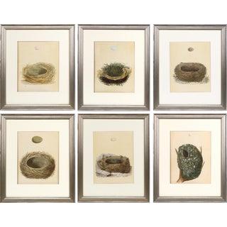 19th C. Francis Morris Bird Nest Woodblock Prints, 1875 - Set of 6 For Sale