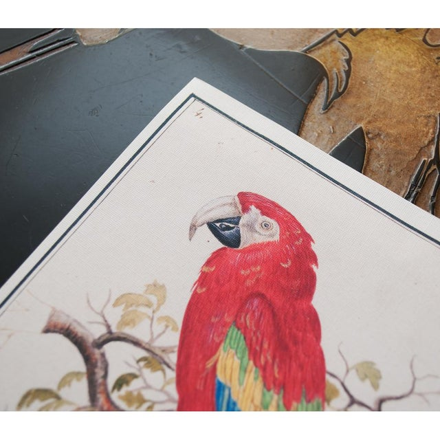 """2010s 1590s Small """"Scarlet Macaw"""" Print by Anselmus De Boodt For Sale - Image 5 of 7"""