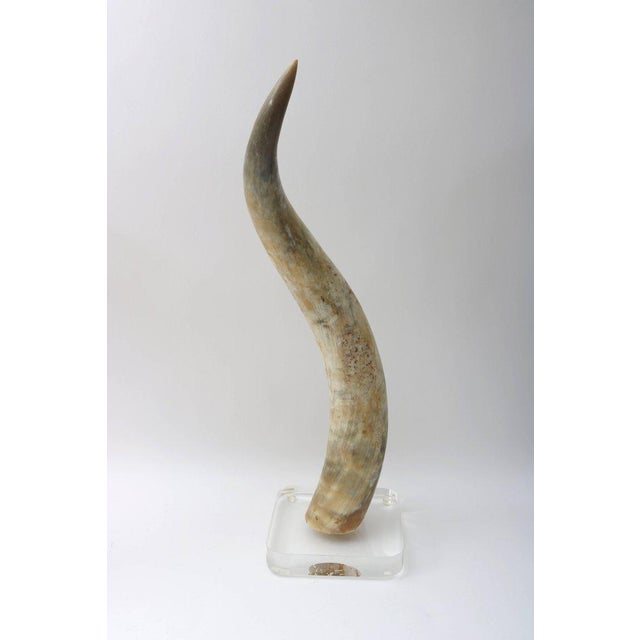 Large-Scale Pair of Steer Horns Mounted on Lucite - Image 6 of 10