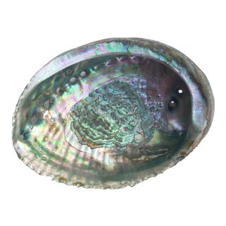 Nautical Iridescent Abalone Shell For Sale
