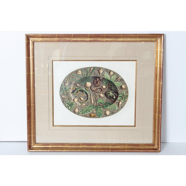 Set of Six (6) Hand-Colored Palissy Ware Lithographs by Rose-Joseph Lemercier For Sale In Dallas - Image 6 of 10