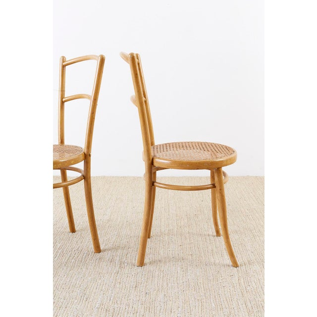 Pair of J. And J. Kohn Austrian Bentwood and Cane Chairs For Sale - Image 10 of 13