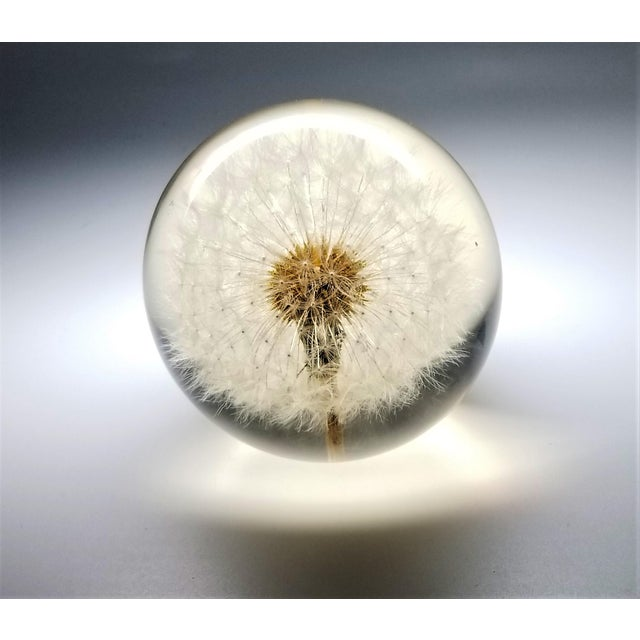 Vintage Lucite Sculpture Paperweight of a Dry Dandelion For Sale In Miami - Image 6 of 12