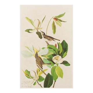 1960s Cottage Style Lithograph of a Warbling Vireo by Audubon