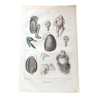 "Vintage French Medical Illustration Entitled ""Monstrusities"" For Sale"