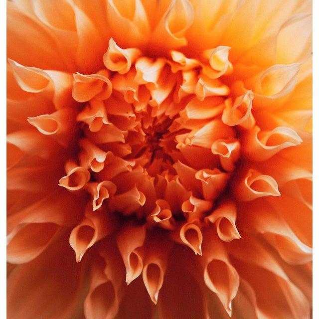 """Petal Origin 1"" Photography For Sale"