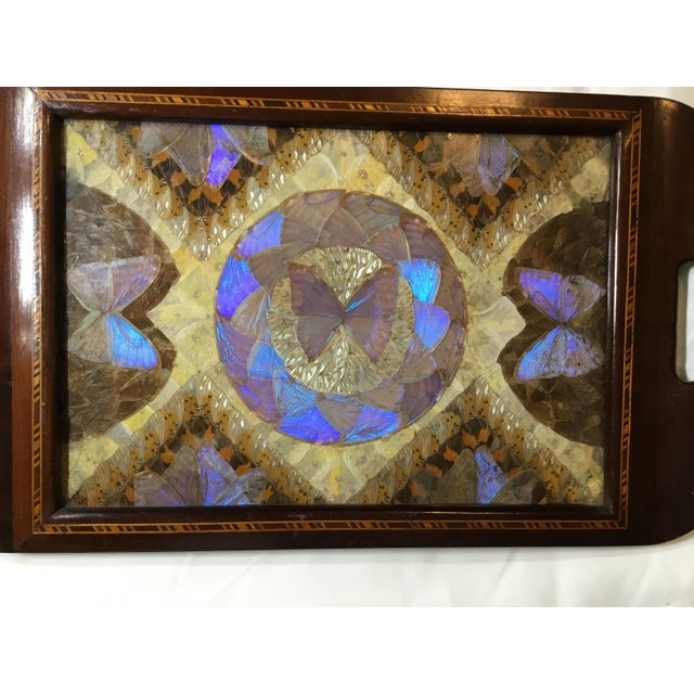 Brazilian Butterfly Wood Tray For Sale - Image 10 of 13