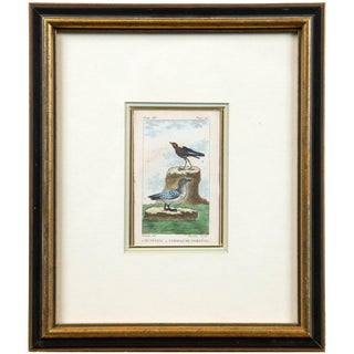 Antique French Engraving of Birds, Paris, Late 18th Century For Sale