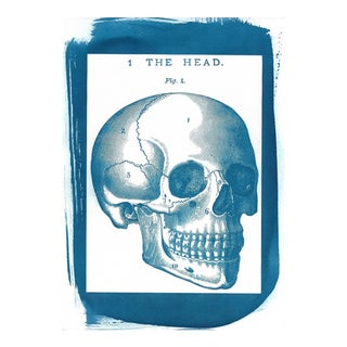Skull Vintage Illustration, Cyanotype Print on Watercolor Paper, A4 size (Limited Edition)