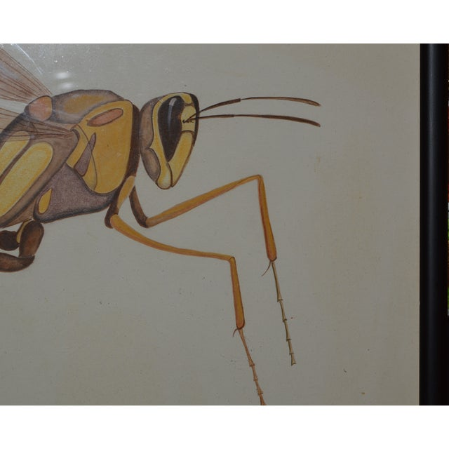 Insect Ant Pencil Paper Framed Art Still Life Painting Drawing Signed Payne For Sale - Image 4 of 12