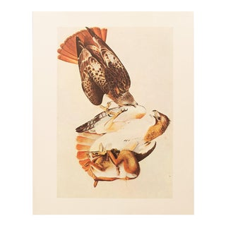 1966 Vintage Cottage Lithograph of Red-Tailed Hawk by John James Audubon For Sale