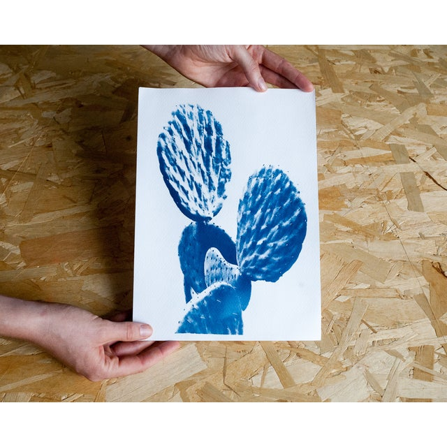 Contemporary Original Cyanotype Print Totally Handmade From A, Succulent Cactus (Limited Edition) For Sale - Image 3 of 4