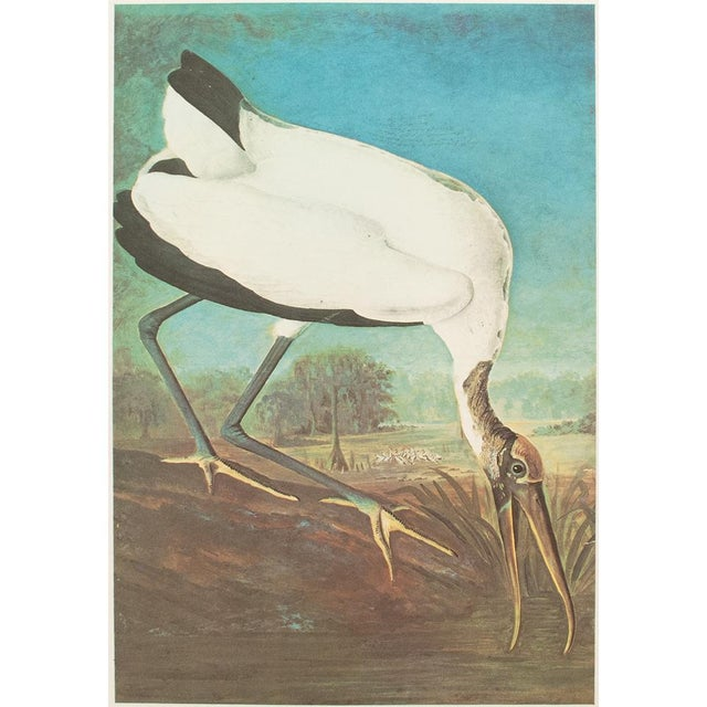 Blue 1966 Cottage Lithograph of Large Wood Ibis by John James Audubon For Sale - Image 8 of 10