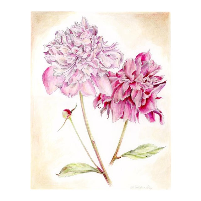 Peonies Original Mixed Media Drawing by Kathleen Ney For Sale