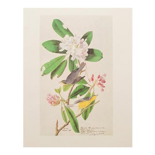 1960s Cottage Lithograph of Canada Flycatcher by Audubon