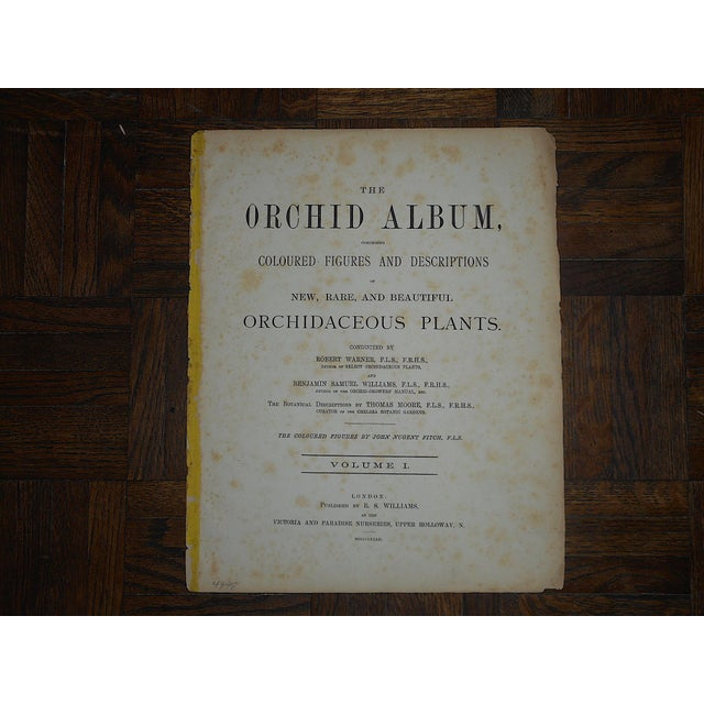 Late 19th Century Antique 19th Century Orchid Lithographs-Set of 3 For Sale - Image 5 of 7