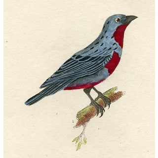 South American Bird Print, 1831 Preview