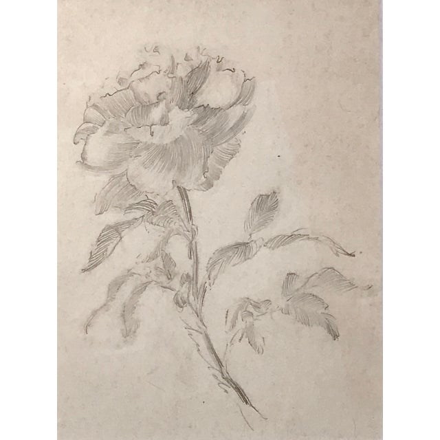 Traditional Antique Drawing of a Flower by Charles Sheldon For Sale - Image 3 of 6