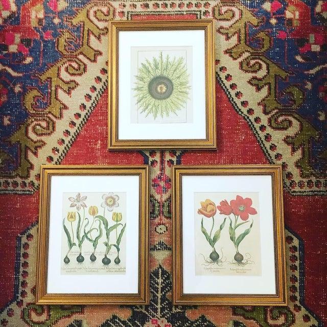 Taschen Botanical Framed Prints - Set of 3 For Sale - Image 6 of 6