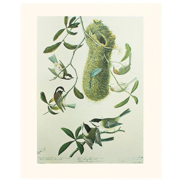 A lovely vintage Cottage Style reproduction of the original lithographic print of Chestnut-backed Titmouse by John James...
