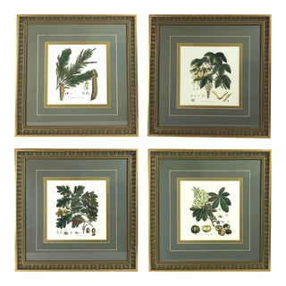 Late 20th Century Botanical Prints - Set of 4 For Sale