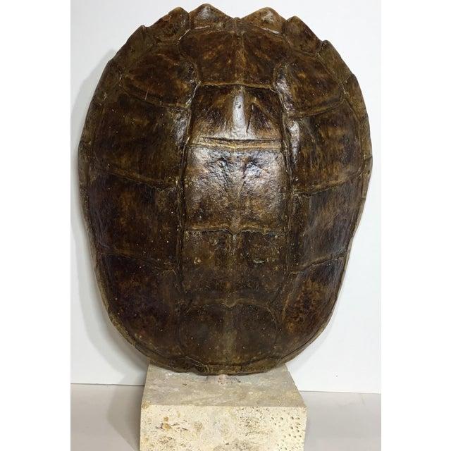 Vintage Turtle Shell on Coral Base - Image 8 of 9