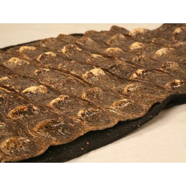 Authentic Nile Crocodile Skin With Felt Backing For Sale - Image 11 of 11