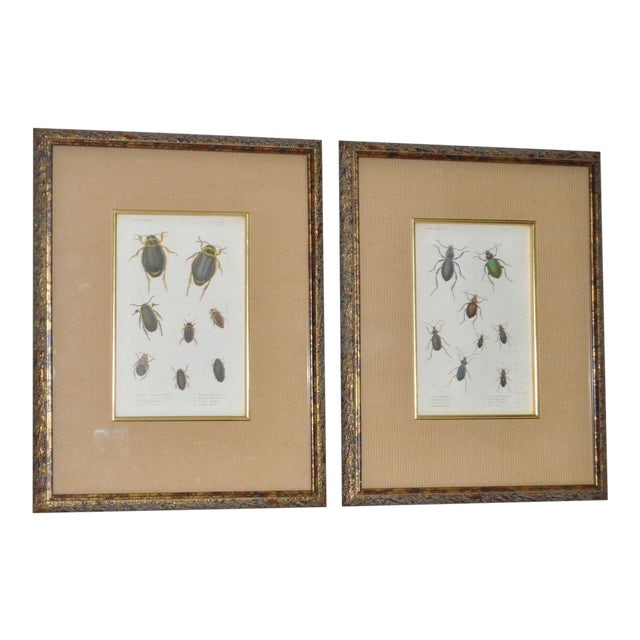 Pair of 19th Century Hand Colored Insect Plates - Framed For Sale