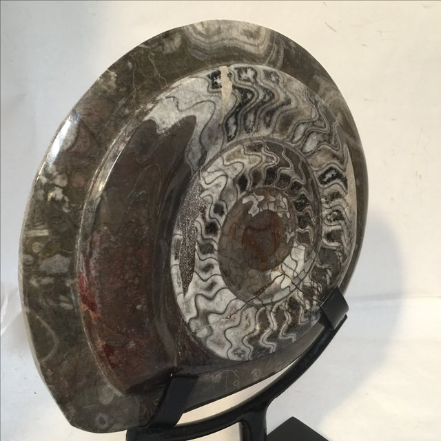 Fossil on Stand For Sale - Image 4 of 9