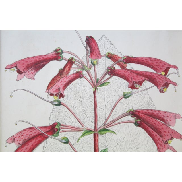 20th Century Realist Pink Botanical Print For Sale - Image 4 of 7