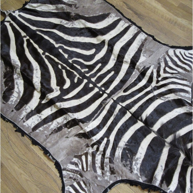 Antique Zebra Hide Rug bound with felt. It has consistent age and wear throughout. Refer to photos for areas of age.