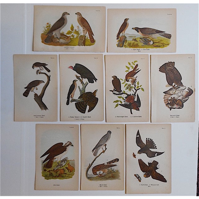 Antique American Bird Lithographs - Set of 9 - Image 2 of 3