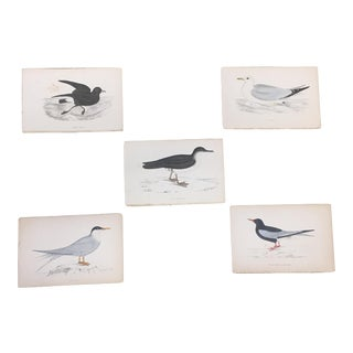 Hand Colored Water Bird Book Plates - Set of 5 For Sale
