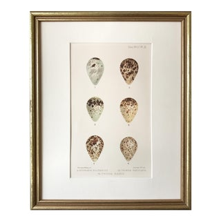 Ornithological Birds Egg Print