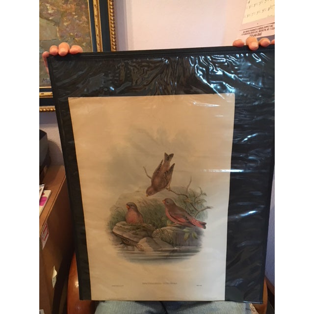 Color Pencil John Gould & William Hart Bird Illustration in the Age of Darwin For Sale - Image 7 of 11