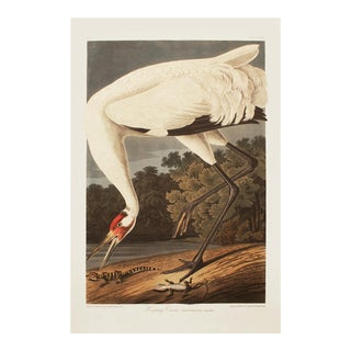 1990s Whooping Crane by Audubon, Large Cottage Print For Sale