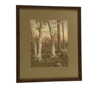 Late 19th Century Hand Colored Woodland Photograph, Framed For Sale