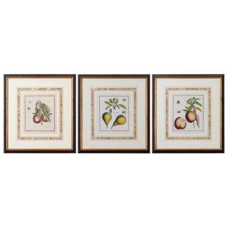 Traditional Duhamel Du Monceau Botanical Engravings - Set of 3 For Sale