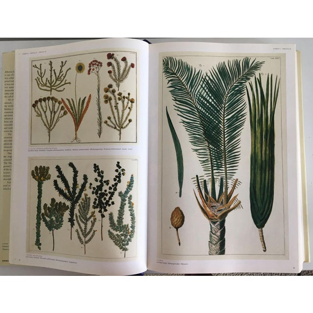 Moving Sale - Cabinet of Curiosities Book by Albertus Seba - Image 7 of 11