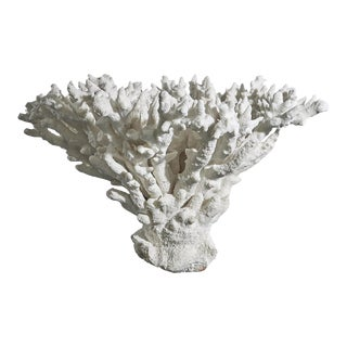 White Coral on Black Lacquered Wood Base For Sale