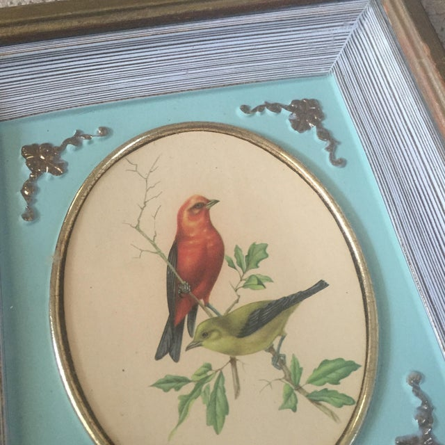 1958 Framed Bird Print - Image 4 of 9