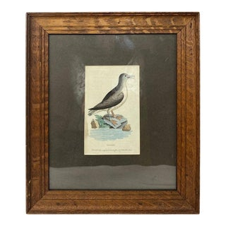 Copperplate Engraving Framed, Circa 1799 For Sale
