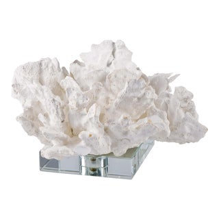 Flower Coral On Crystal Base in White For Sale