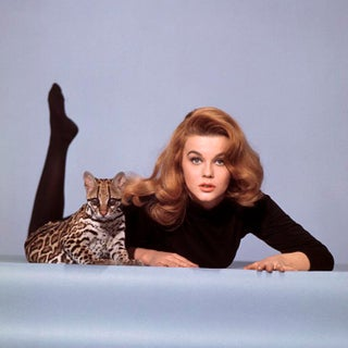 """1964 Ann-Margret With Ocelot During the Making of """"Kitten With a Whip"""" (24x24 Canvas) For Sale"""