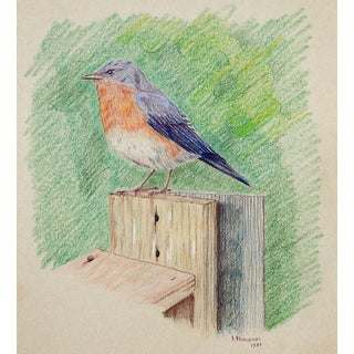 Colored Pencil Drawing of Blue Bird For Sale
