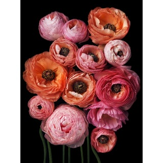 "Photographic Botanical Print, ""Abundance"" by Artist Debi Shapiro"