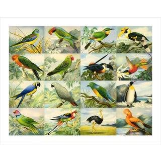 Vintage '16 Birds' Archival Print For Sale