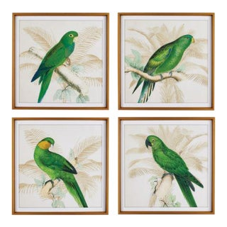 Green Parrots Study from Kenneth Ludwig Chicago - Set of 4, Framed For Sale